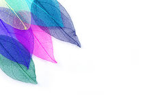 Macro leaves seamless background texture Stock Photos