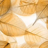 Macro leaves seamless texture Royalty Free Stock Photos
