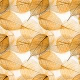 Macro leaves seamless texture Stock Images