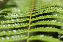 Macro of leaves from a small branch tree royalty free stock images