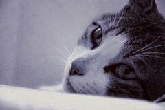 Macro Lens Photo of Cat Royalty Free Stock Images
