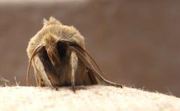 Macro lepidottero a Lochwinnoch fotografia stock libera da diritti