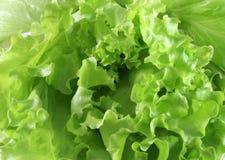 Macro lettuce Stock Photography