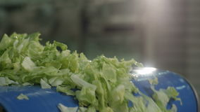 Macro Lettuce Leaves Move Fall from Conveyor stock footage