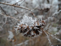 Macro life. Its a macro shoted tree leaf in frost weather Stock Photography
