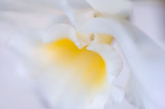 Macro of lilly flower Royalty Free Stock Photos