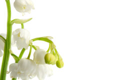 Macro lily of the walley flowres. Left position. Copy space for text Stock Image
