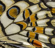 Wing patterns of Lime butterfly. Macro of Lime Butterfly wing patterns and colors stock images