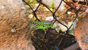 Macro of lizard. royalty free stock photography