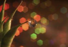 macro lumière de texture d'abrégé sur usine de fond de bokeh Photo libre de droits