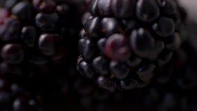 Macro mûre Plan rapproché de Blackberry 4K banque de vidéos