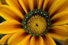 Macro marguerite Photos stock
