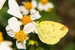 Macro - mariposa en margarita imágenes de archivo libres de regalías