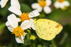 Macro - mariposa en margarita foto de archivo