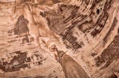 Macro marrón oscura de la textura del alerce de Botanolite foto de archivo libre de regalías