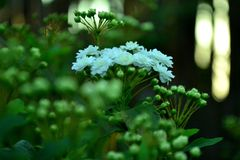 Macro mazzo di fiori Fotografie Stock Libere da Diritti
