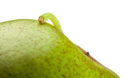 Macro of measuring worm on pear Royalty Free Stock Photos