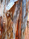 Macro Melaleuca Bark. Macro photograph with details of the beautiful textures in the Australian Paperbark tree Royalty Free Stock Images