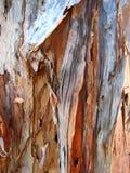 Macro Melaleuca Bark Royalty Free Stock Images