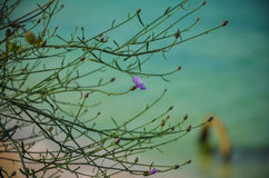 Macro mer sauvage de la Bulgarie de plage de Krapetz de fleur Images stock