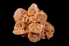 Macro mineral stone desert rose or sand rose on a black background. Close up royalty free stock photo