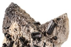 Macro mineral stone Schorl, Black Tourmaline on the feldspar on a white background. Close-up royalty free stock image