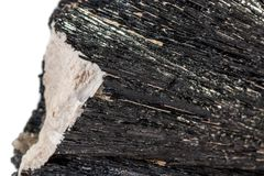 Macro mineral stone Schorl, Black Tourmaline on a white background. Close up royalty free stock photography
