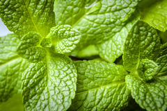 Macro of mint leafs Stock Photography