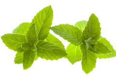 Macro mint leaves Royalty Free Stock Image
