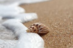 Macro mode. The coastal wave touches a beautiful shell lying on a clean sandy coast.  stock photo