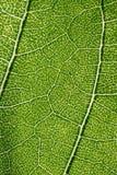 Macro modello della foglia di verde Immagini Stock