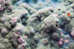 Macro of mold relief Stock Photography