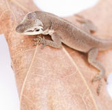 Macro of molting reptile on leaf Stock Images