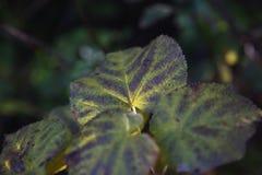 Macro monde des feuilles Photos libres de droits