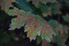 Macro mondo delle foglie Fotografie Stock Libere da Diritti