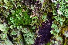 Macro: mooi mos op een boom Stock Foto