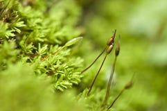 Macro Moss Stock Photo