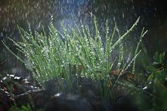 Macro moss beautifully blur Stock Photos