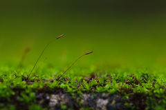 Macro from moss Stock Images