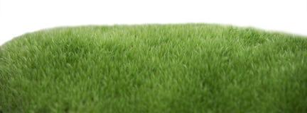 Macro of moss isolated on white background stock photos