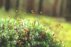 Macro of moss and plants. Background, abstract green spring Royalty Free Stock Images