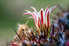 Macro of moth and cactus flower on blurred background Stock Photo