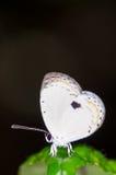 Macro of moth Stock Images