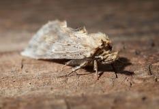 Macro of moth on wood Royalty Free Stock Photo