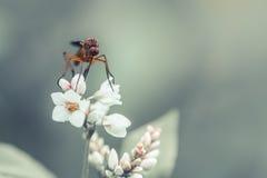 Macro mouche sur une fleur blanche Photos stock
