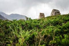 Macro mousse et cryptes de photo sur un flanc de coteau Photo libre de droits
