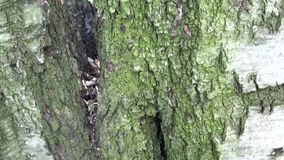 Macro move up tree. Camera slowly moves up a tree. Starts on macro shot of up the trunk. stock footage