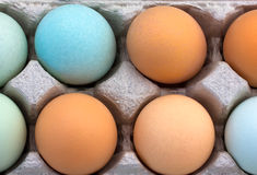 Macro of Multi-Colored Organic Eggs Stock Photo