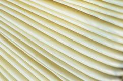 Macro of mushroom Royalty Free Stock Photography