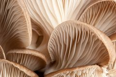 Macro of mushrooms stock image
